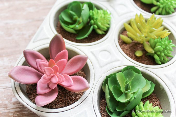 DIY Muffin Tin Succulents Garden