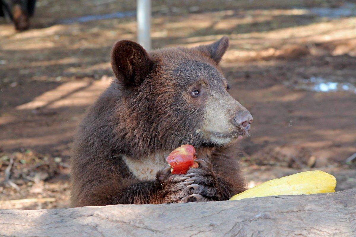 House overturns rule & sanctions killing hibernating bears and wol...