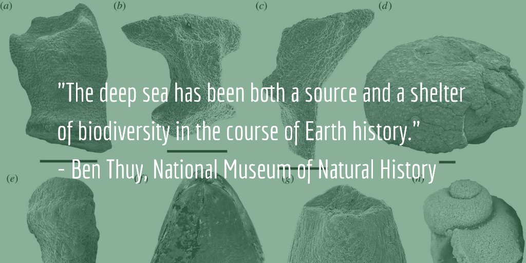 #DayofFacts by #MNHNLresearch The deep sea has been both a source and a shelter of biodiversity in Earth history https://t.co/GfcZY87DfH https://t.co/VZWVwRL4cn