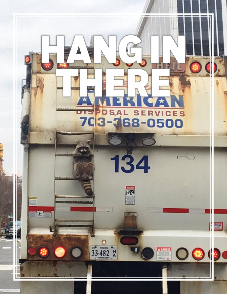 This Raccoon That Got Stuck On A Trash Truck Is America Right Now
