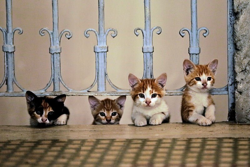 A magical documentary following the lives of 7 street cats of Istanbul...