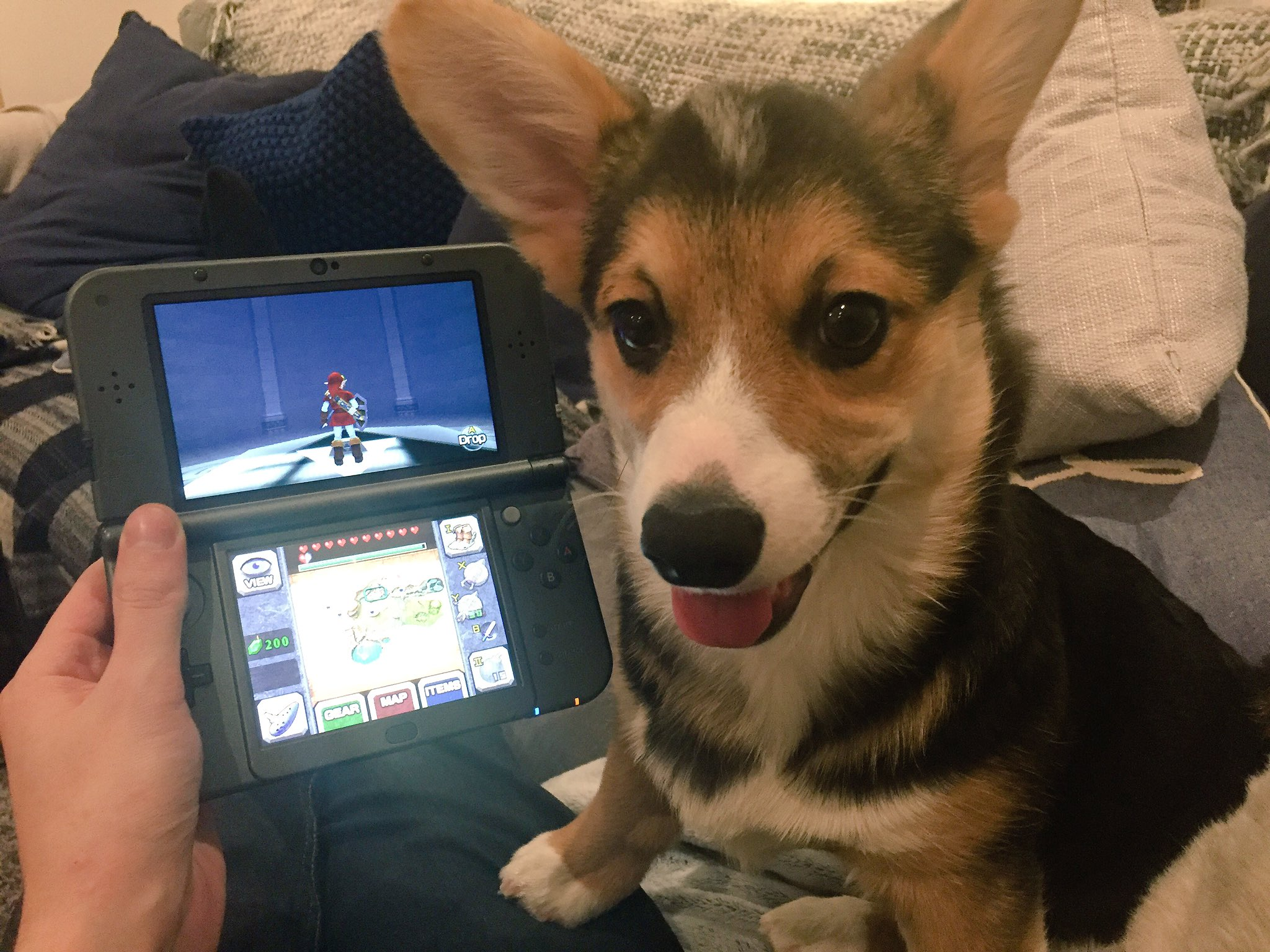 Stampy Cat On Twitter Quot Zelda Puppy My Perfect Friday