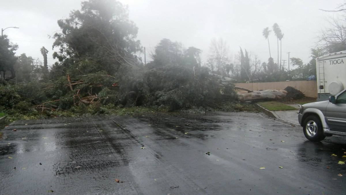 A viewer sent us this pic of a huge tree down on Donna Ave in Reseda. Have great video/photos of the storm? Tag us w/ #ktla <br>http://pic.twitter.com/duUOM8T3bF