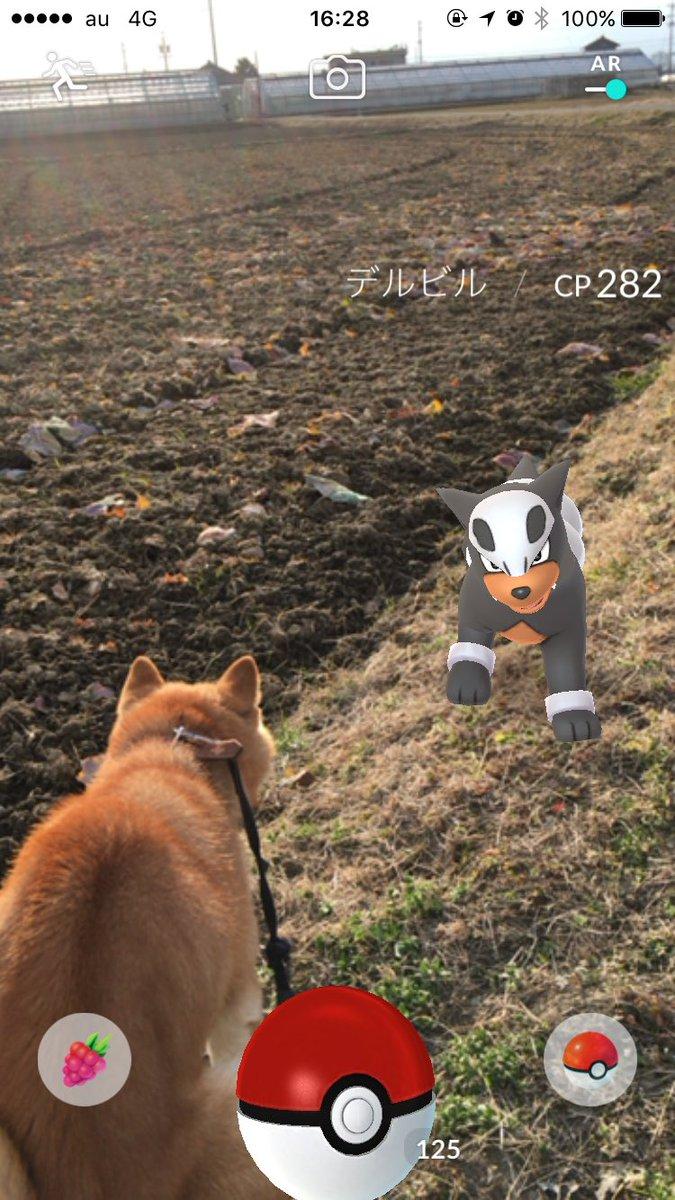 散歩中に遭遇してリアルポケモンバトルみたいな写真撮れた pic.twitter.com/lzCWJSaCQc