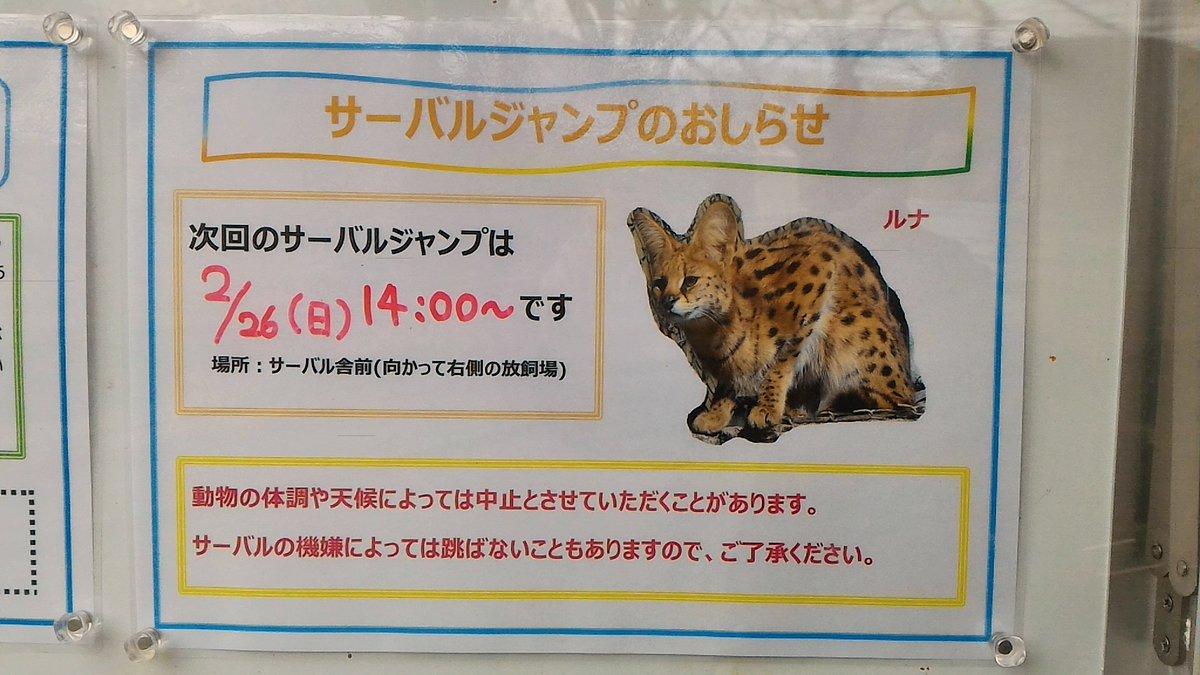 多摩にサーバルちゃんを見に行く皆さん、来週がチャンスでーす https://t.co/rVnGLPBbkU