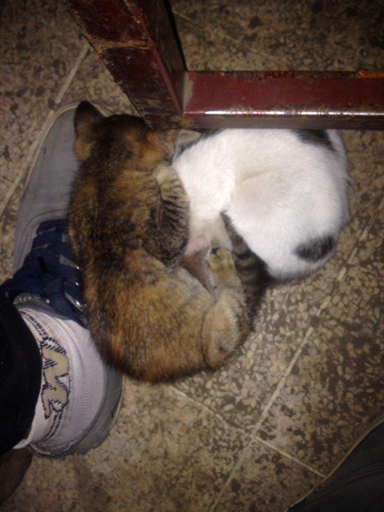 Unduh 87+  Gambar Kucing Ngopi Terlihat Keren