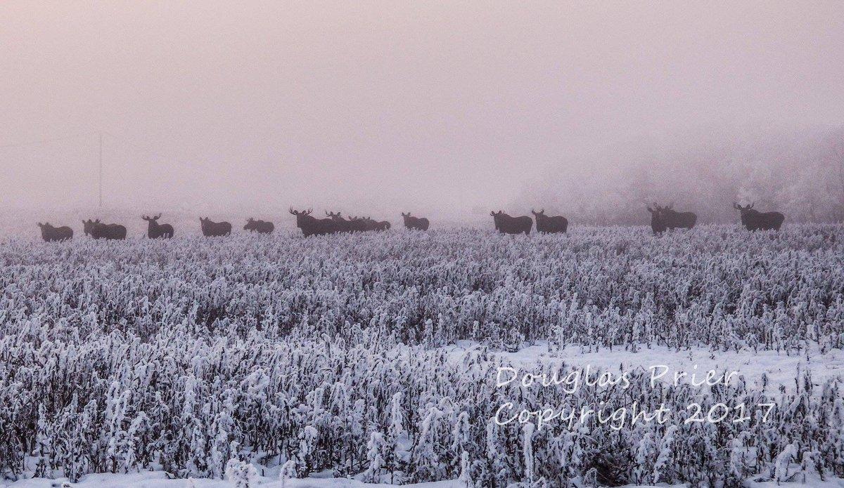 Check out this photo taken east of Camrose, Alberta  by Douglas Prier. @GlobalEdmonton News. https://t.co/vu2p9nb5BX
