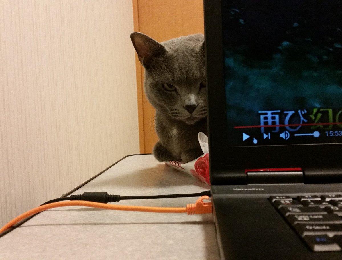 気づいたらパソコンの裏側から、妖怪がティッシュ潰しながらじーっとこちらを覗いていてびびった「パソコンやめてオレをかまえ」という無言の圧力だろうか。最終的にはLANケーブルに直接攻撃してきたし・・ pic.twitter.com/KpBoskZSTu