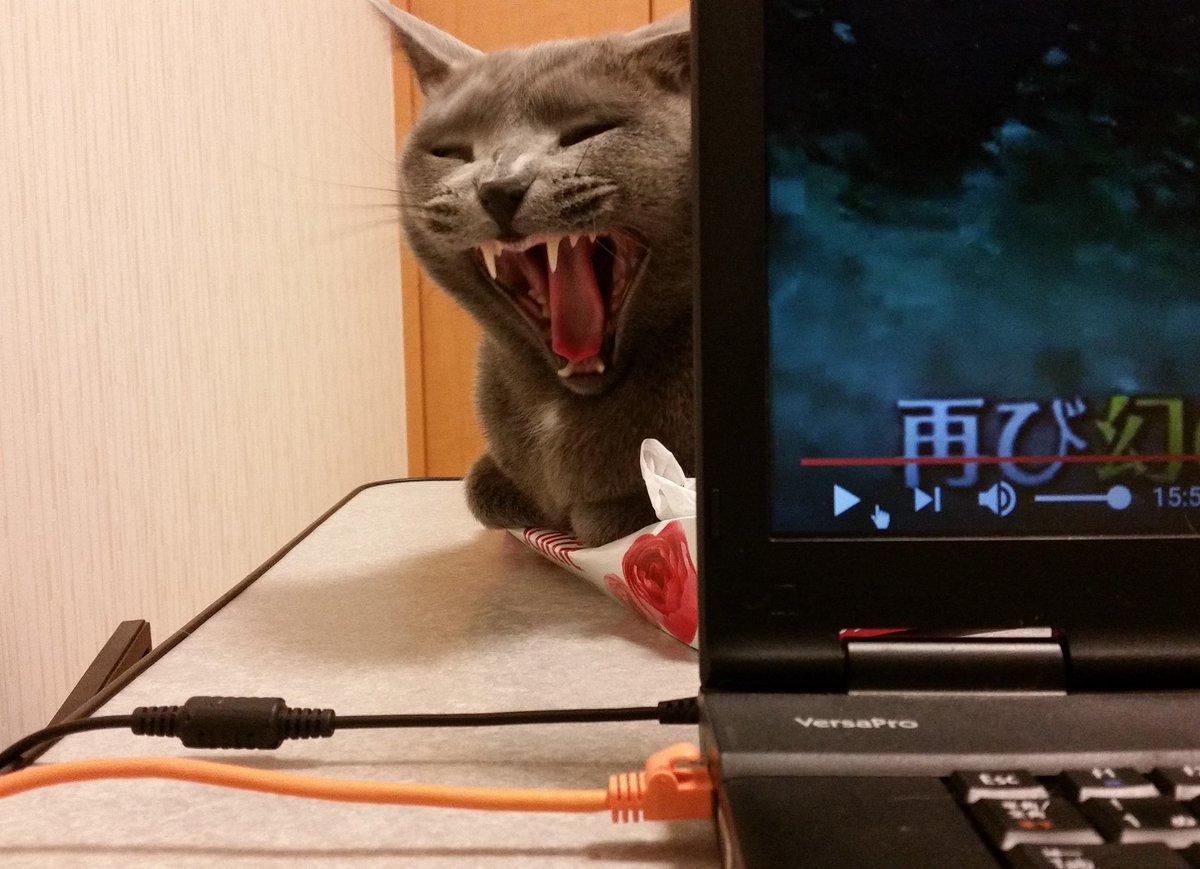 気づいたらパソコンの裏側から、妖怪がティッシュ潰しながらじーっとこちらを覗いていてびびった  「パソ…