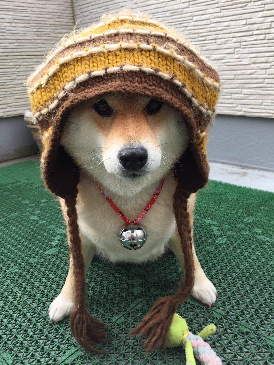 今日はチョッピリ寒いんだってー。 pic.twitter.com/LSPktFvHxv