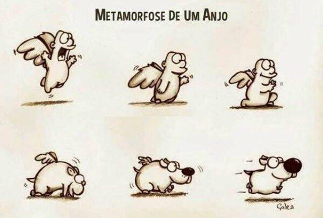 Metamorfose de um anjo https://t.co/jDs7QsbXwP