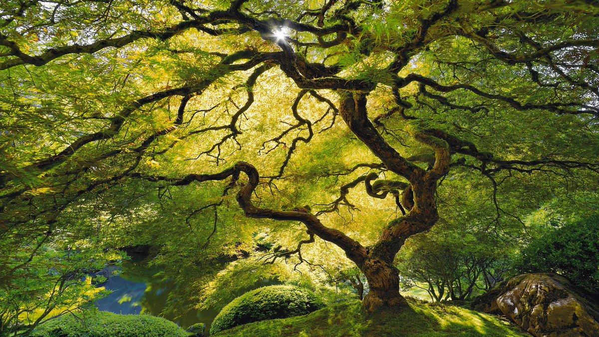 Wallpapervn Com On Twitter Https T Co Vzaffxuedi Tree