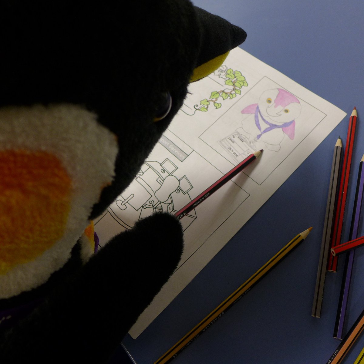 Pablo Penguin (@uoppenguin on Twitter) colouring in a book