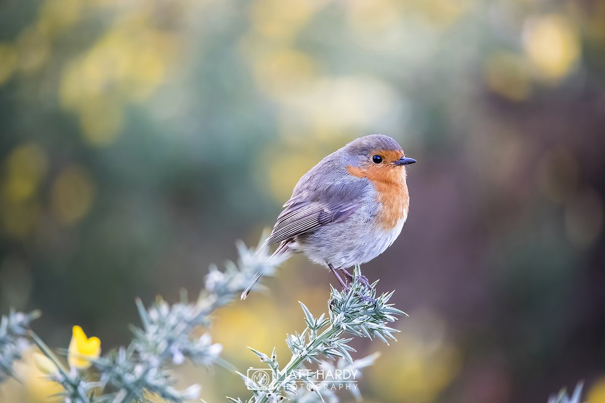 .@MHardy_Photo is back with this lovely image. You can practically feel the crisp, cold air! Nice bokeh, too #WexMondays https://t.co/SlpfkpkBpm