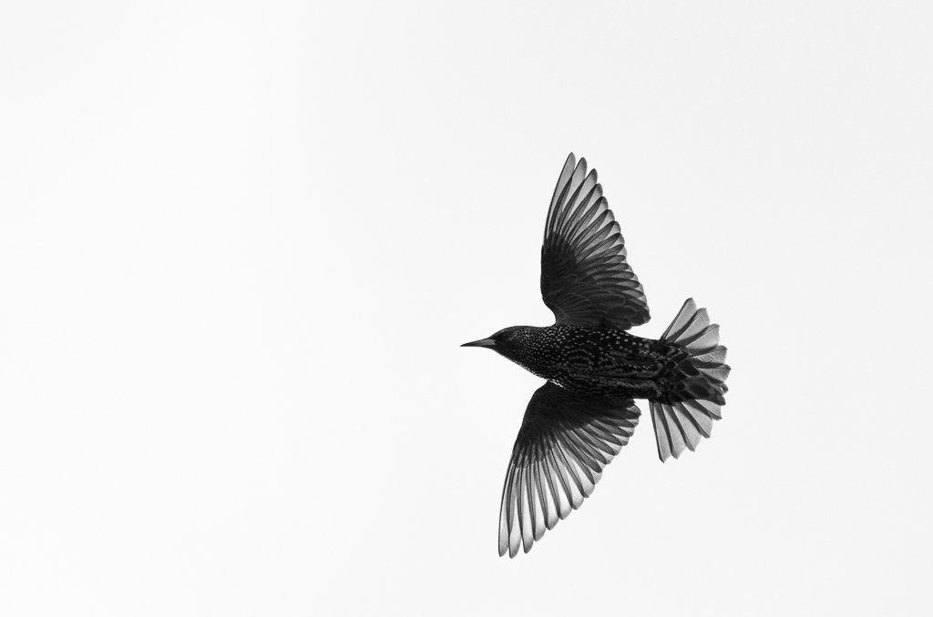 In third place this week, it's @IainDBarker's well-timed starling portrait #WexMondays https://t.co/JMmroq8757