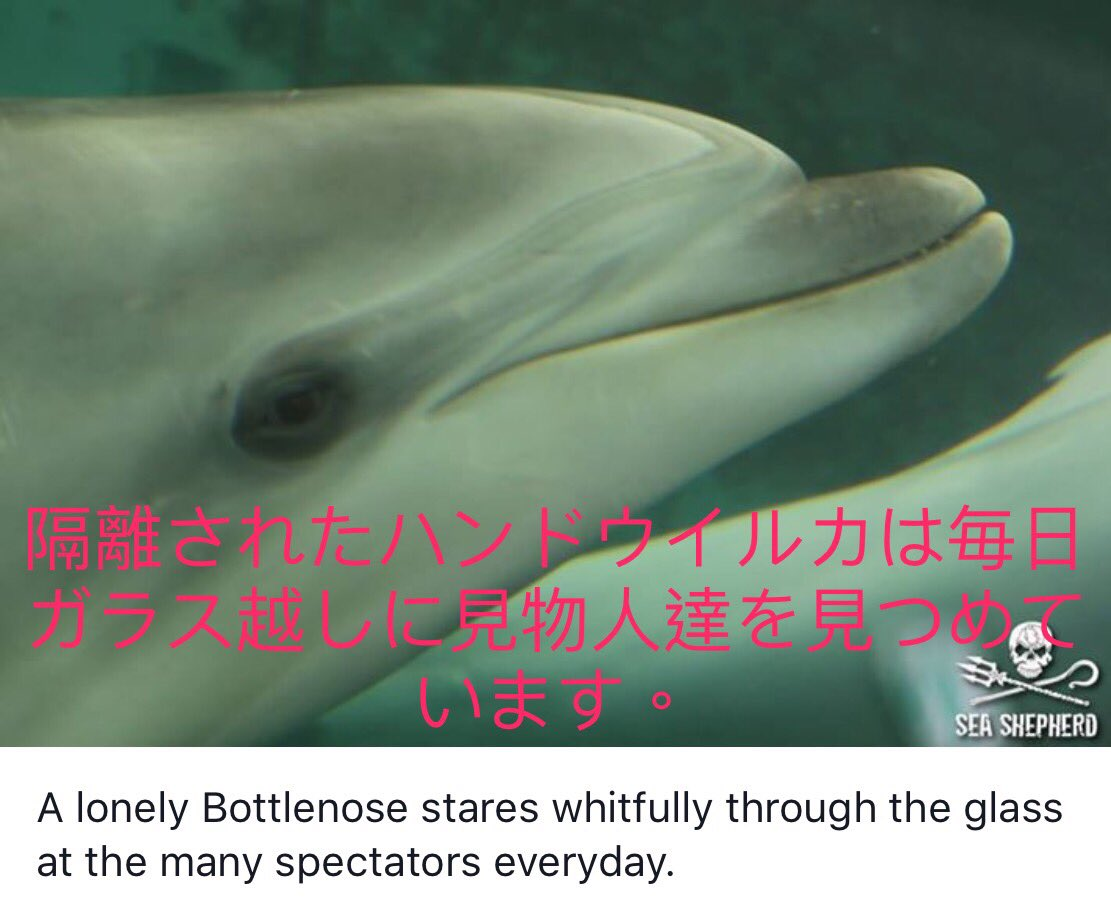 Physical and Mental Health of #dolphins in #aquariums deteriorate. Please RT #dolphinangels http://bit.ly/dolphinangels