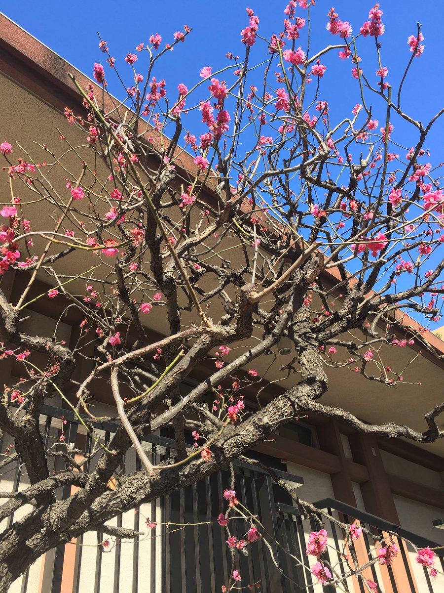 桜が人気を集め過ぎてるけど、俺は梅が好き。。。 だけど写真が梅かは分からん。。。