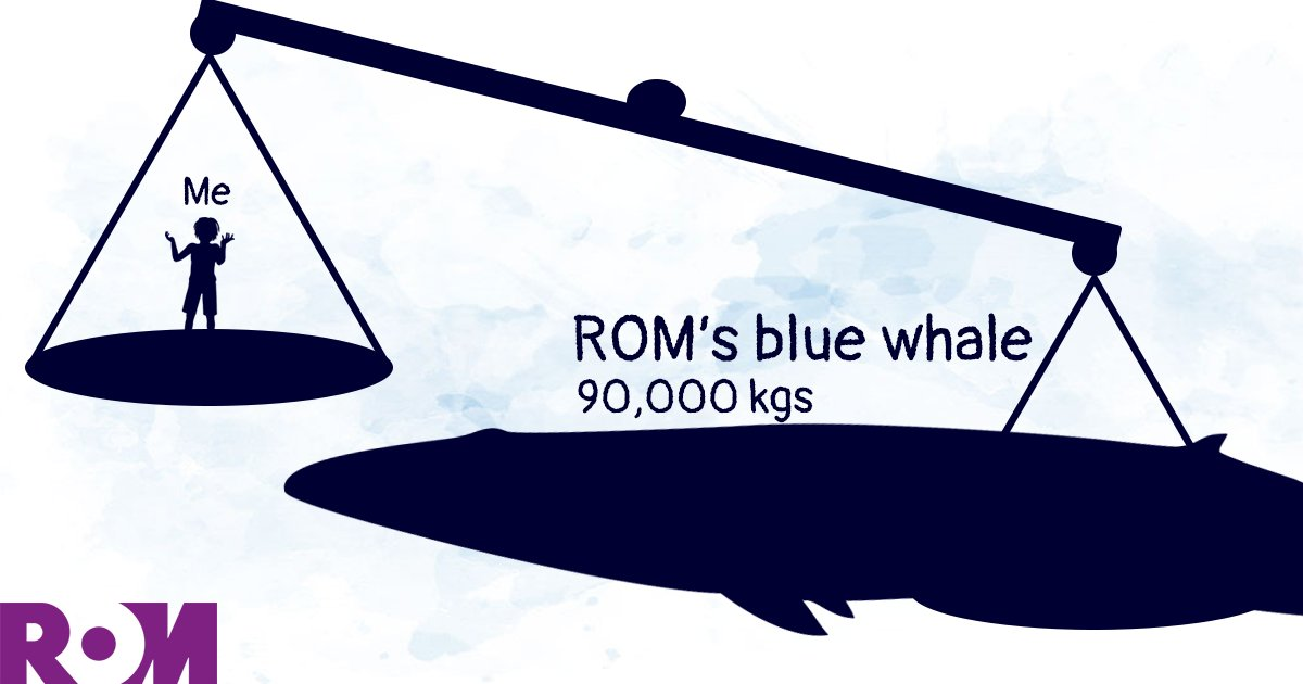The ROM's blue whale weighs 1503 times more than me! <br>http://pic.twitter.com/fw91xg1fMF #ROMBlueWhale  https://www. rom.on.ca/blue-whale/cal culator &nbsp; …