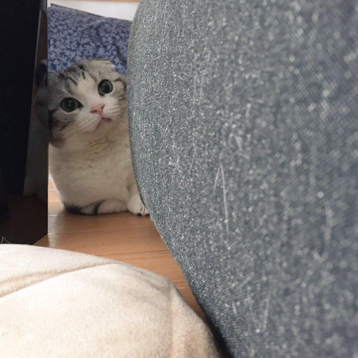ソファに座ったままでいると  「こんなに近くにいるのに 捕まえられないんですか?」  って挑発しに来…