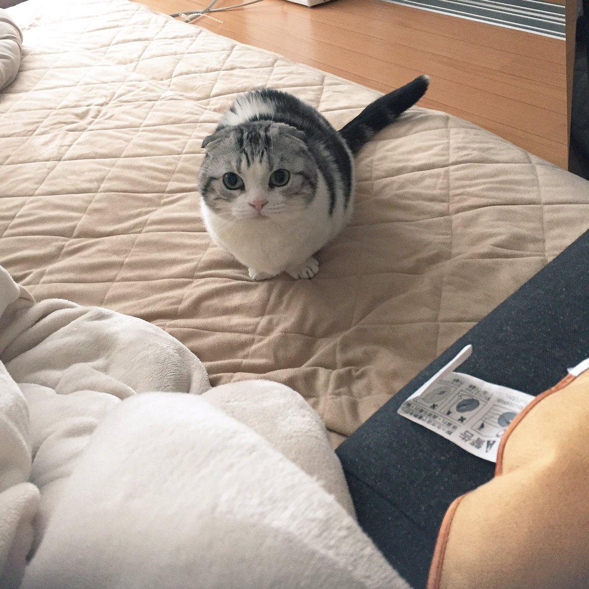 ソファに座ったままでいると「こんなに近くにいるのに捕まえられないんですか?」って挑発しに来る pic.twitter.com/n8cvFrqZpH