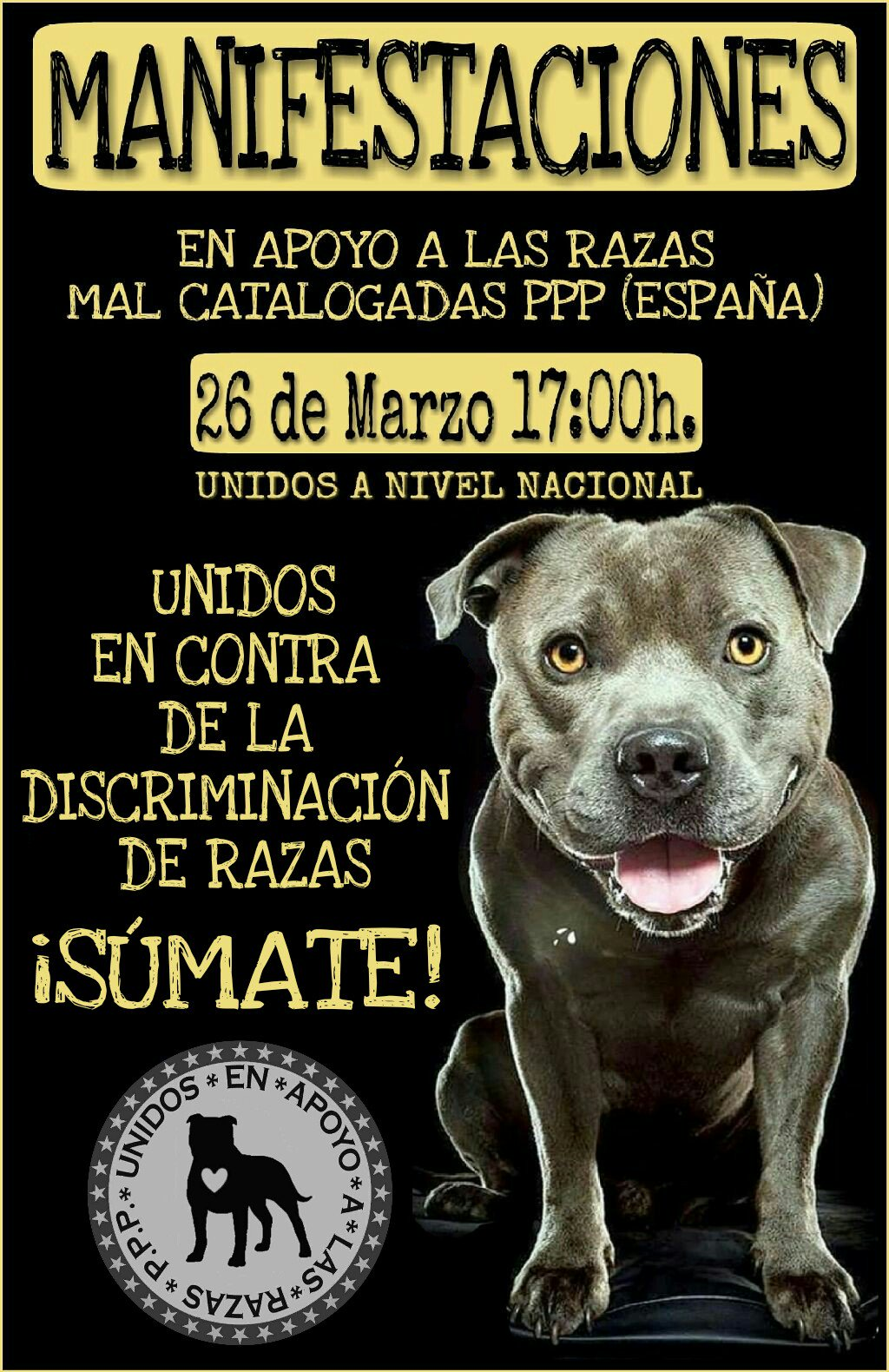 Bull terrier ley espana