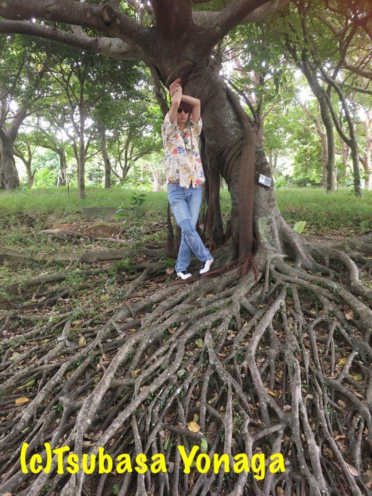 まだまだありますよぉ〜〜(*´꒳`*) こちらは カメラが回っていない所で首里城内に生えている木とえ…