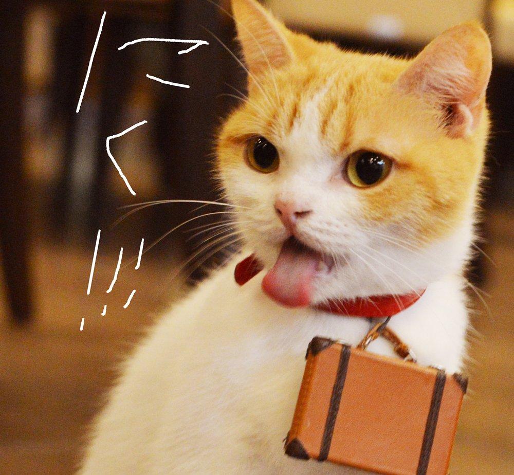 さかにゃもいいけどお肉もにゃ!! jalan.net/news/tag/%E8%8… #肉の日 #グ…