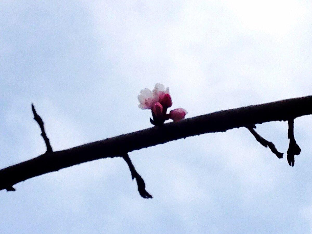 京都の嵐山にあるキミマツサクラさんが、今年も震災における鎮魂、復興の願いを込めたイベントを行われるそ…