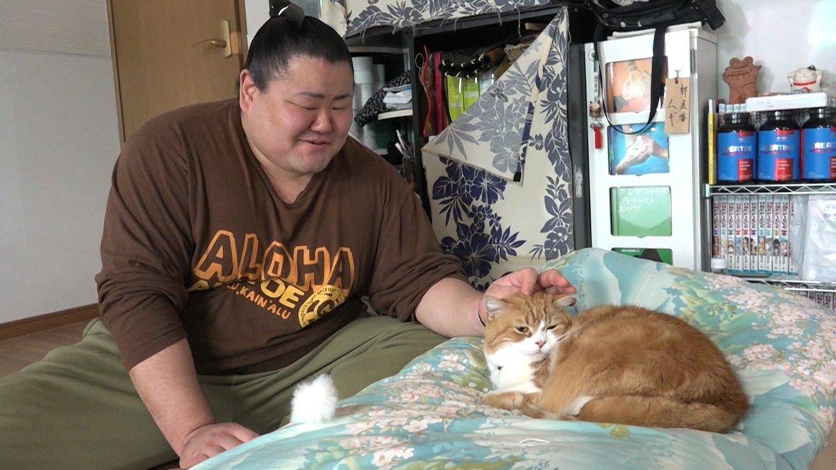 今夜のZEROカルチャーはネコの特集です。  いま、相撲部屋で暮らすネコがSNSなどで話題となってい…