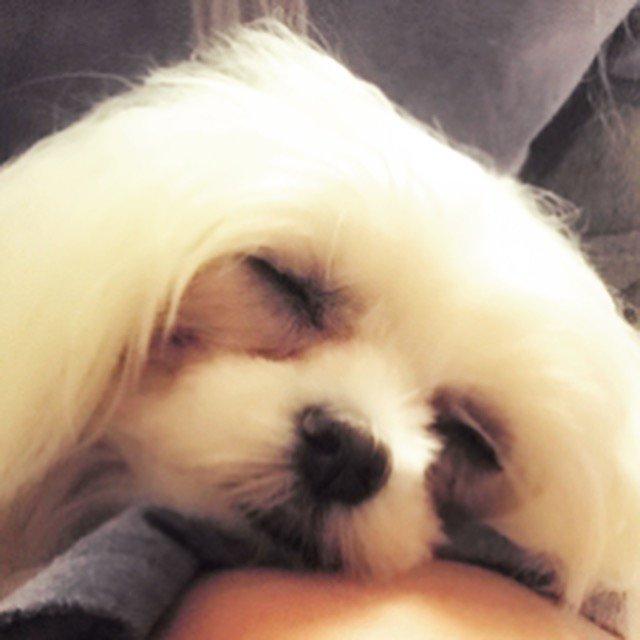 #GoodNight ! おやすみ!#WeAreX  Xx instagram.com/yoshik…