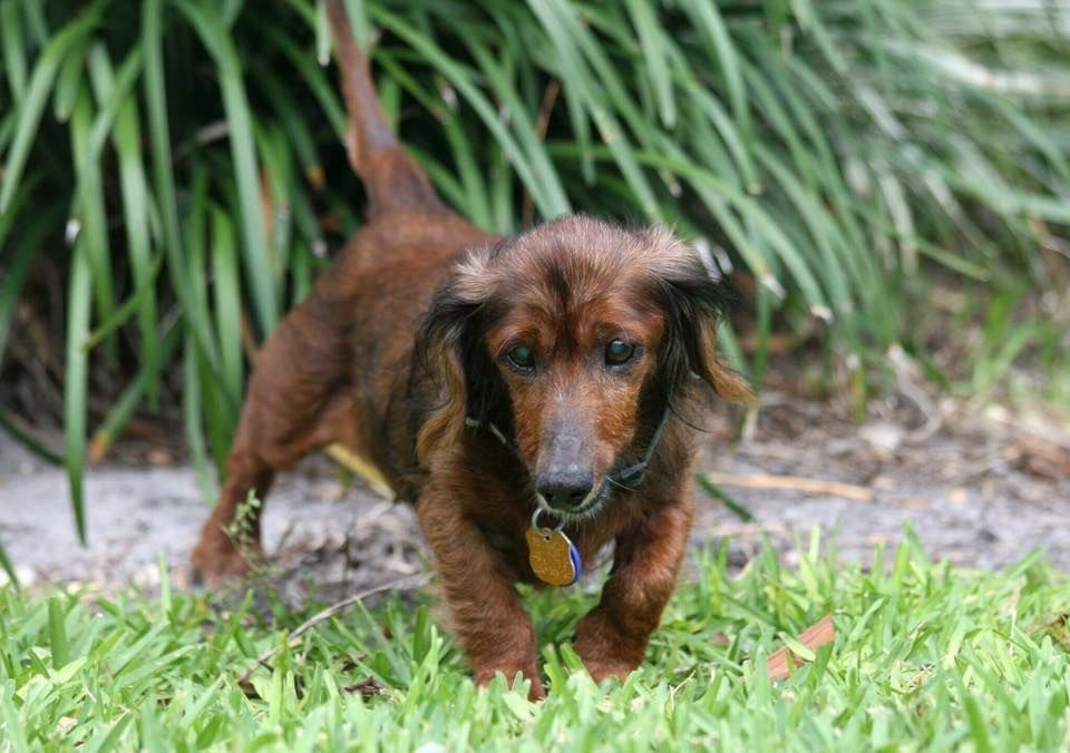 Https Www Thedodo Com  Year Old Rescue Dog  Html
