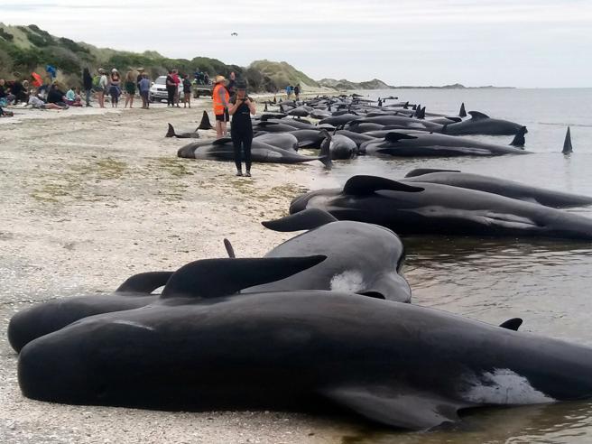 la foto della spiaggia con le balene