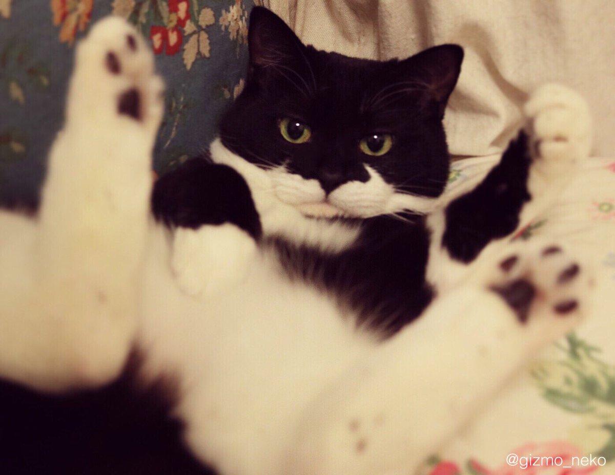寛大な心で受け止めてくれそうな 猫の写真が撮れました