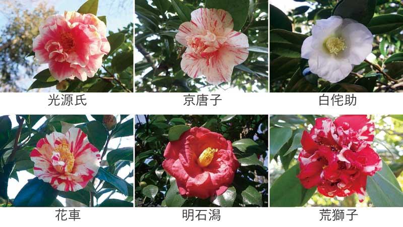 一足早い春の訪れ。  井の頭自然文化園のツバキ園。東京ズーネット・花ごよみ最新号☞tokyo-zoo…