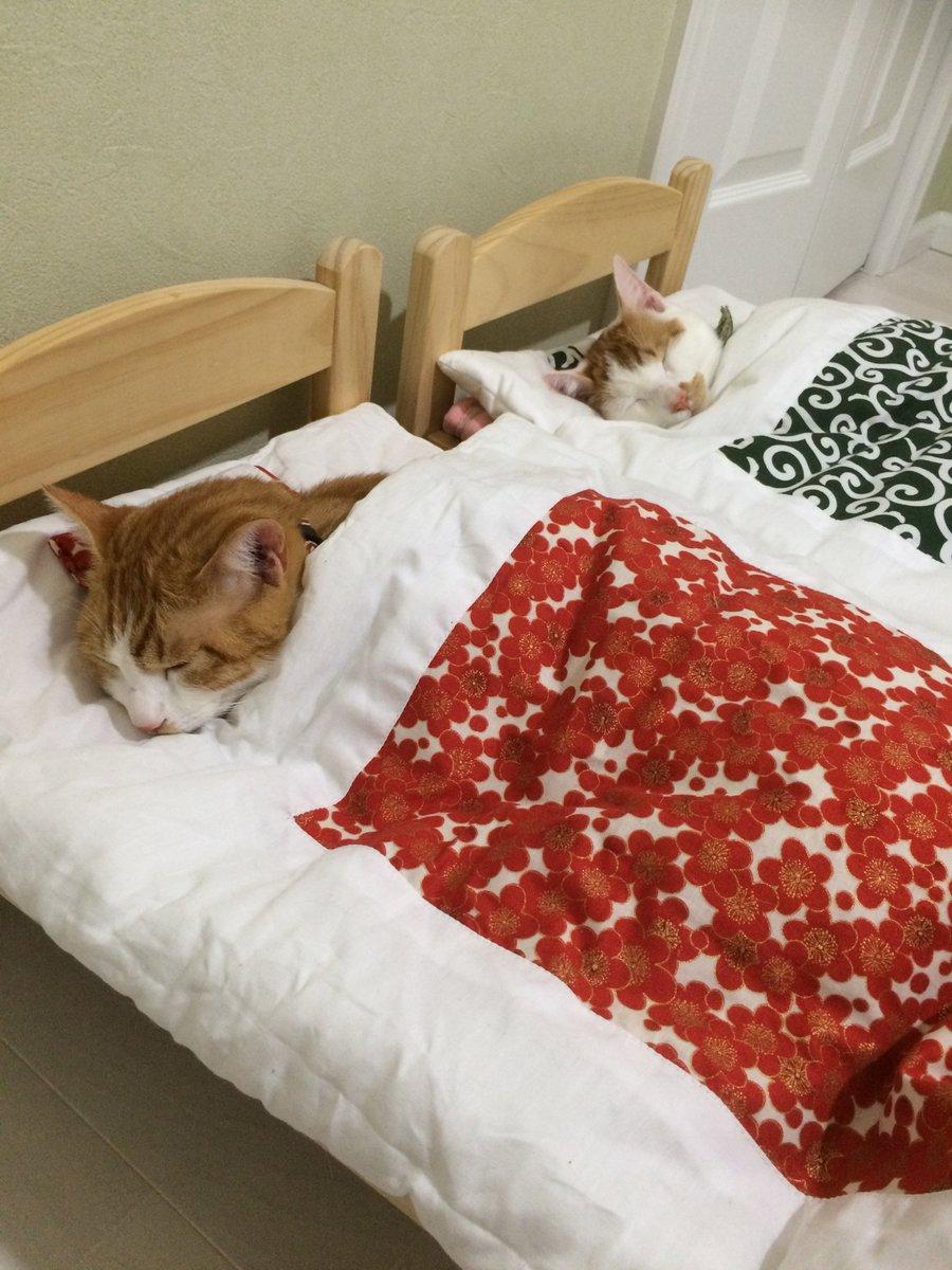 今日2月10日はふとんの日。  猫にもふとんを買ってあげよう!    #ふとんの日 #布団の日