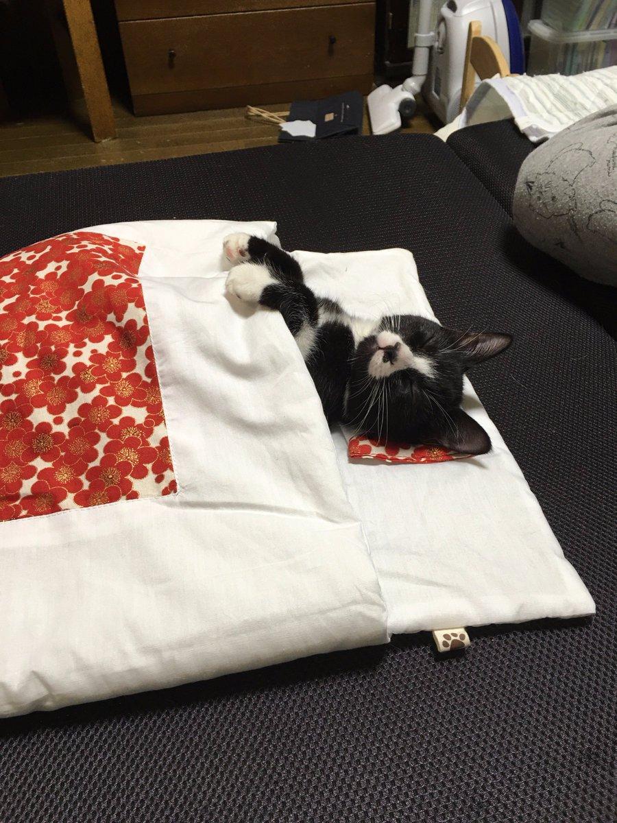 2/10は布団の日ー!人間だけじゃなくて、布団が大好きな猫にも布団を着せてみた!
