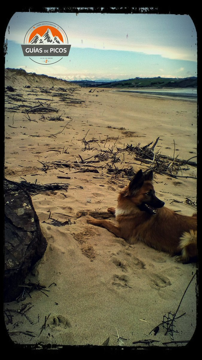 We love #cantabria and #picosdeeuropa!!  Playa de Liencres y @Picos_de_Europa  #beach&amp;mountain<br>http://pic.twitter.com/2W6lx2CnaF