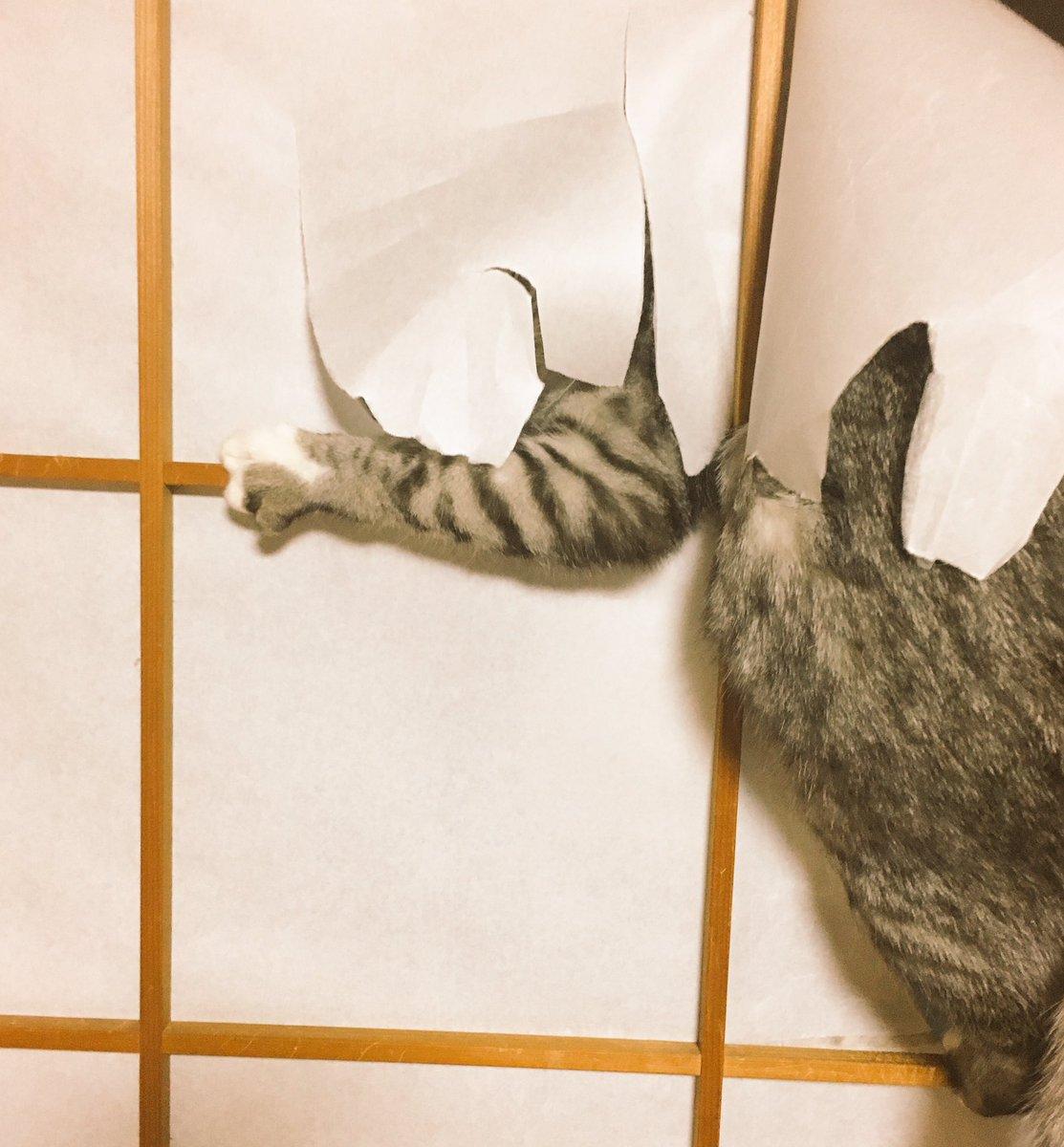 「この時間の猫のテンションをご覧ください」