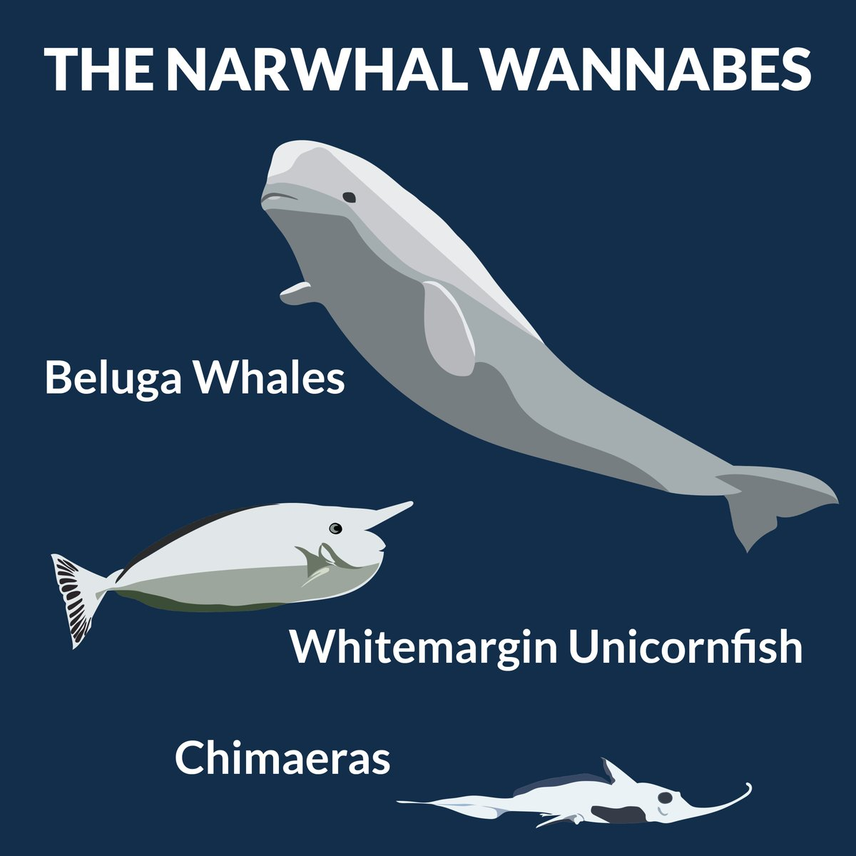 narwhalweek hashtag on twitter