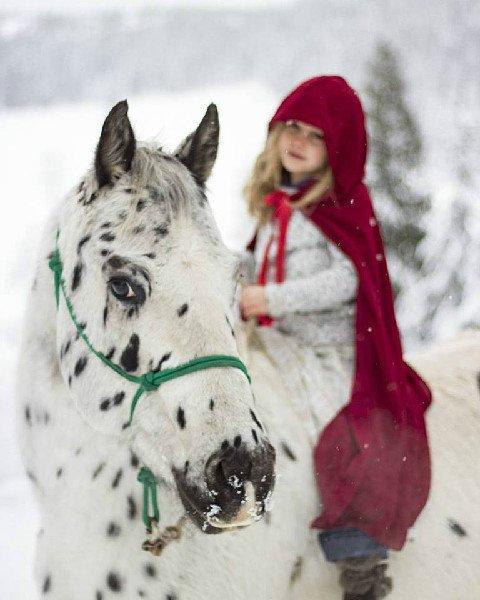 Seven Guest Ranches for Snowy Winter Adventures https://t.co/AwwuA83XF5 #duderanch #travel #horseback #ski https://t.co/ug4O1jtDOS