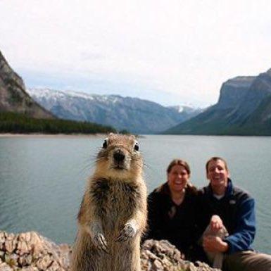 人の写真に勝手に入ってきちゃった動物の画像って、いつ見ても笑えるよね。