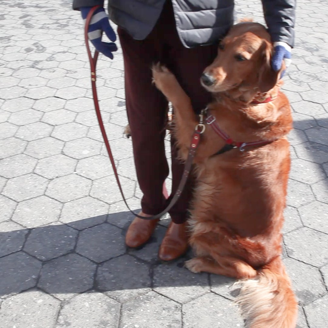 Meet the adorable dog giving out hugs to New Yorkers, @louboutinanyc! https://t.co/A6UHADLtu8