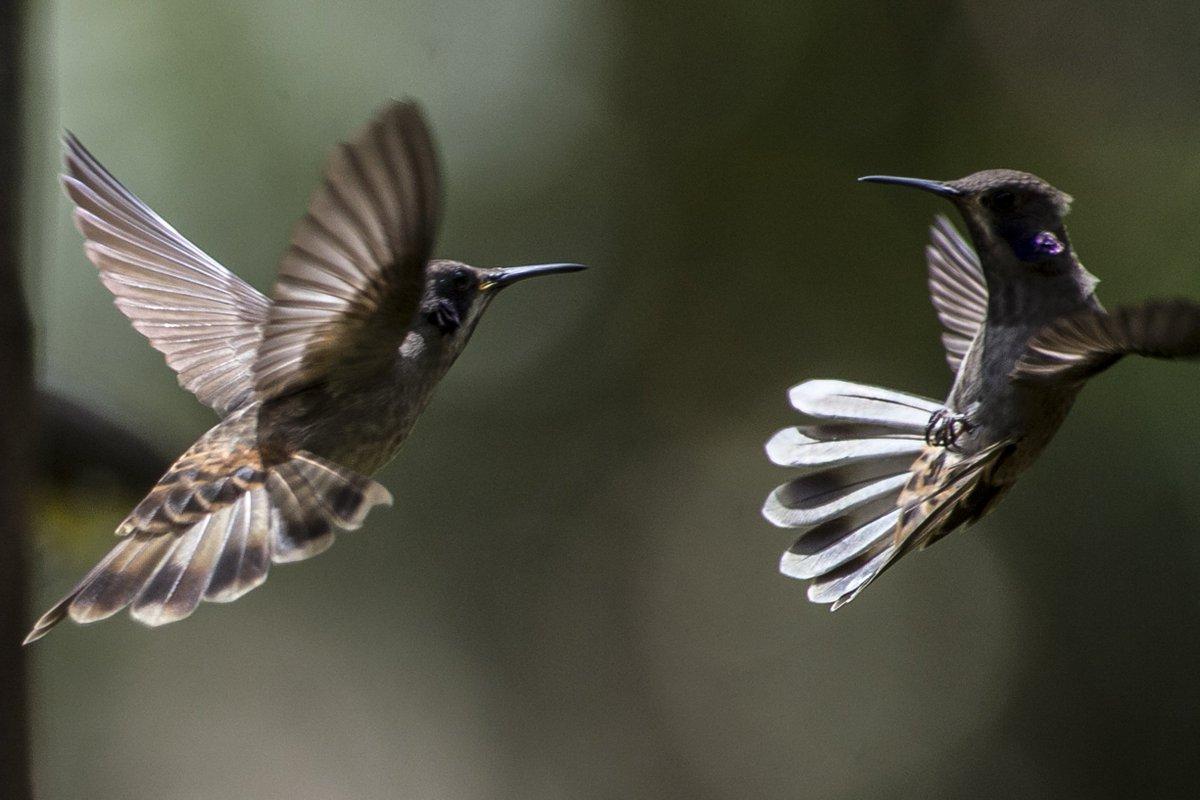 Solo en Colombia es posible oír cien aves en un día, dice experto urug...