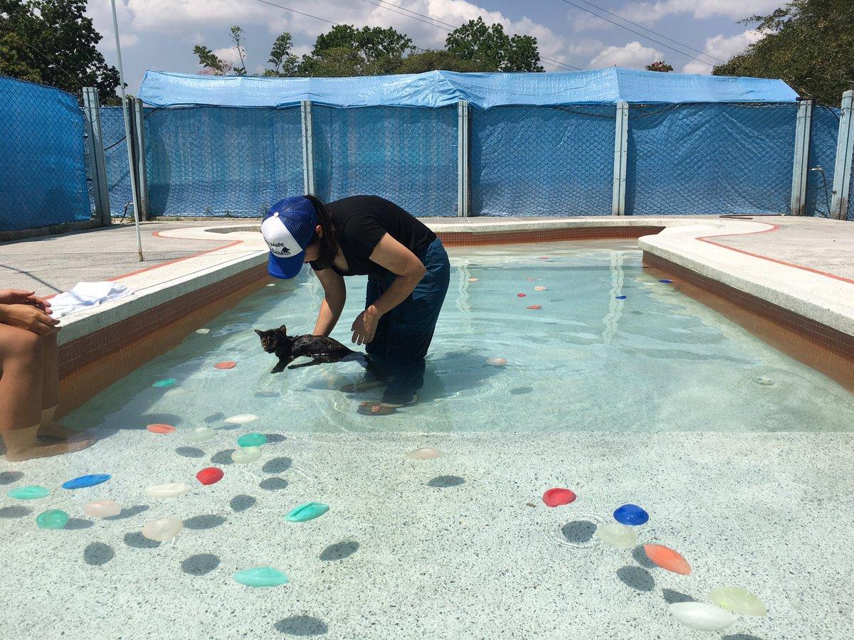 Resultado de imagen para hidroterapia felina