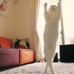 この猫ちゃん、ただ者じゃない!もしかして有段者なのか!