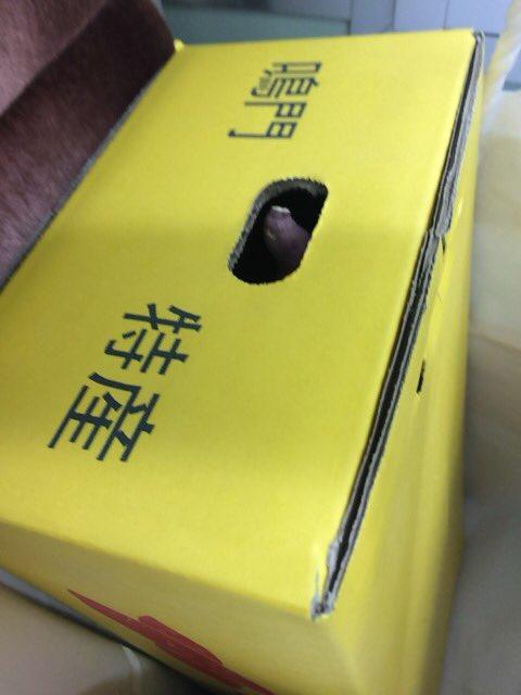 倉敷ライビュ参戦のみなさまへ  岡山駅でやっていた鳴門市の観光イベントにて鳴門金時(箱)を当ててしま…