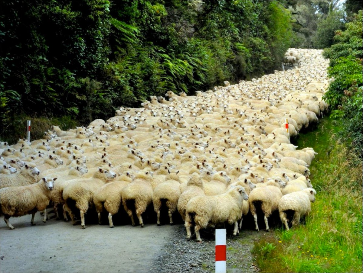 This is what we call a traffic jam! #ChooseWool https://t.co/pjWpYK7Cvy