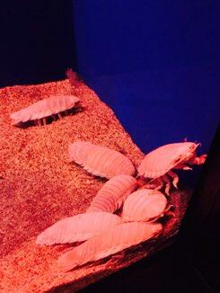 ちっすーと水族館の話!の写真!🐠 2枚目の写真はちっすーに撮られた謎の爆笑中の私…!何が面白かったの…