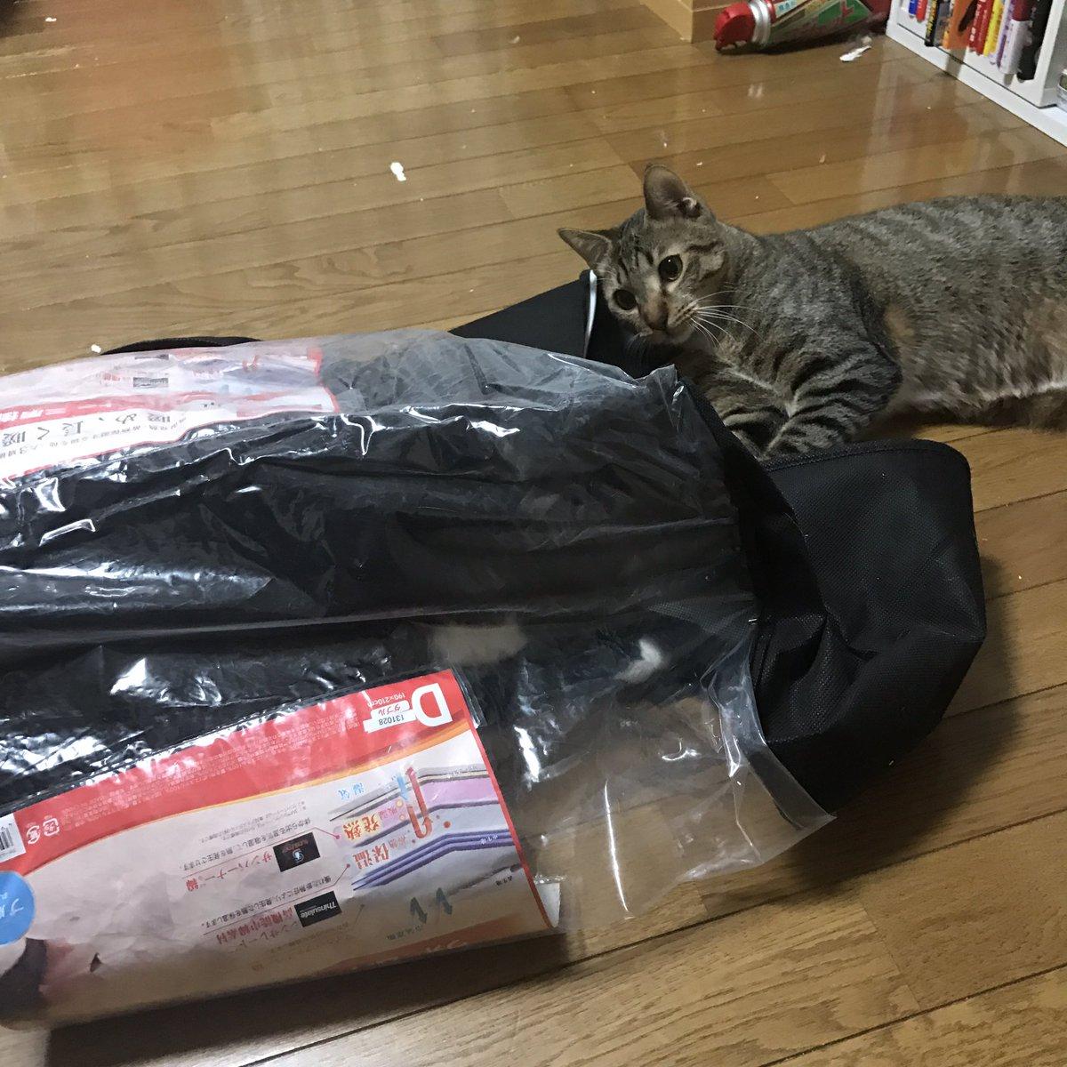 猫って、袋あったらすぐ入りますよね。