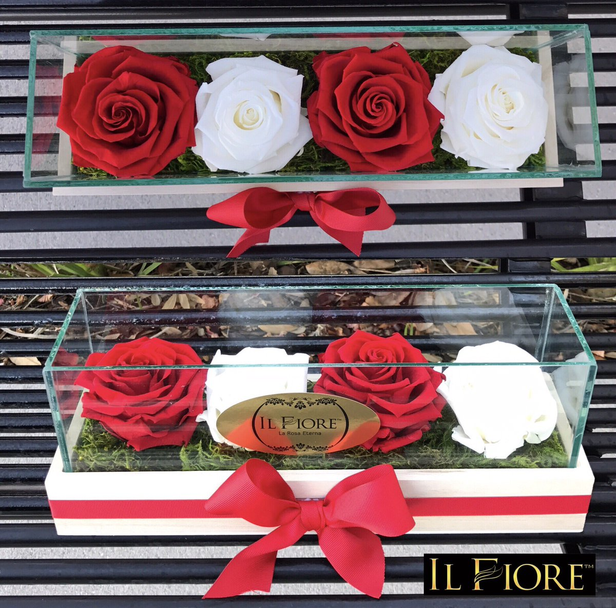 Il Fiore Bartolone On Twitter Roses That Last One Year Call Now To Order Your Eternal For Valentine S Day Valentinesday Flowers Love Winterpark